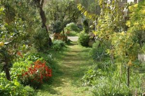 Beautiful garden to safely host events during the time of Covid